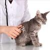 Ветеринарные клиники в Лебедяни